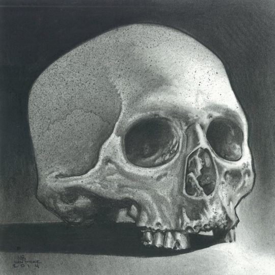 Skull Study (Charcoal)