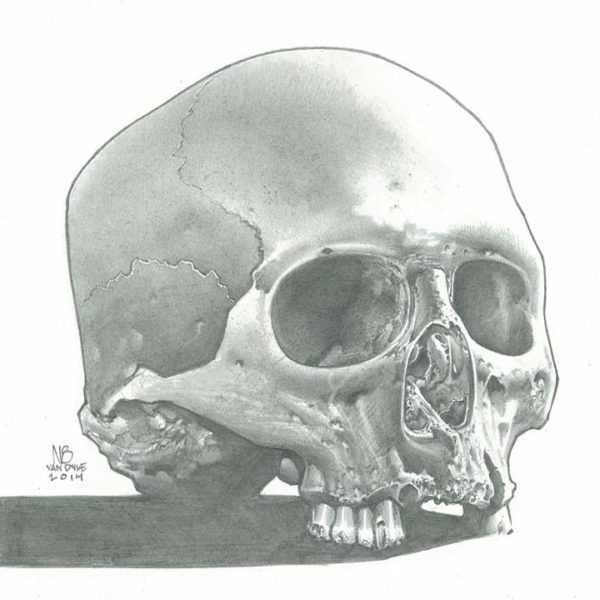 Skull Study (Pencil)
