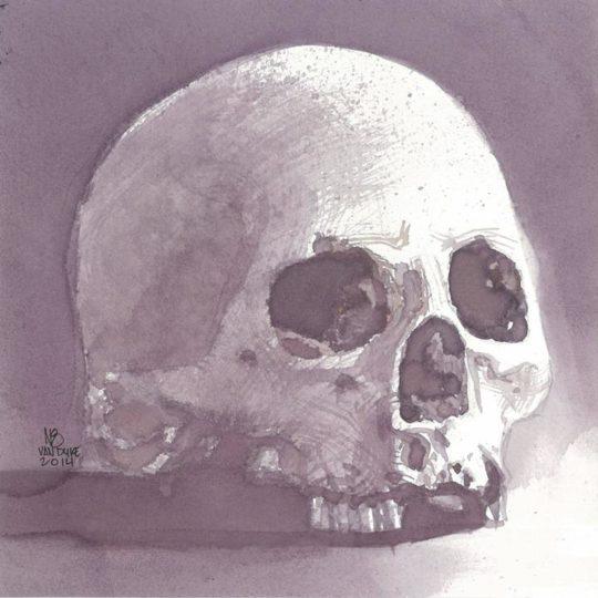 Skull Study (Wine)